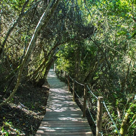 Suspension bridge Trail